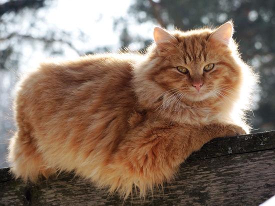 Кошка обломала зубы об соседа