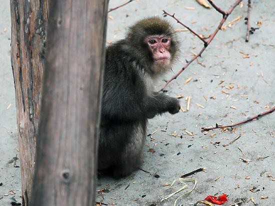 Женщина хочет секса с обезьяной