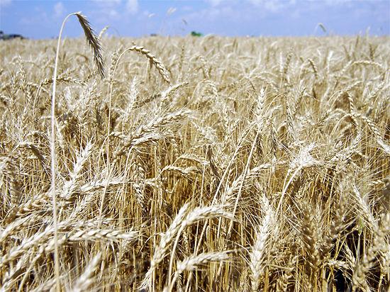 Россия зависит от импортных семян