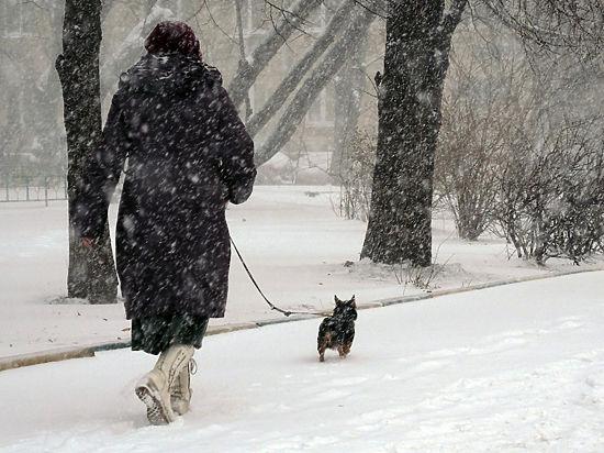 Московские собаководы готовятся к атаке догхантеров