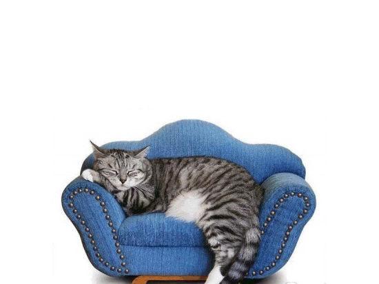 Московские гостиницы для кошек и собак готовы к сезону отпусков