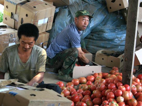 Поднебесный помидор. Китайские фермеры в России: зло или благо?