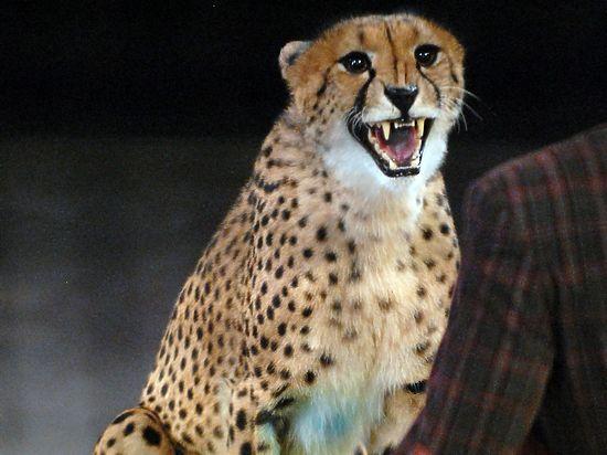 Эдгард Запашный поддержал введение в Мексике запрета на цирк с животными