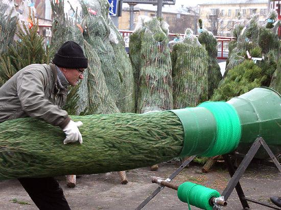Москвичи, задержанные за похищение елок, признались: хотели создать себе новогоднее настроение