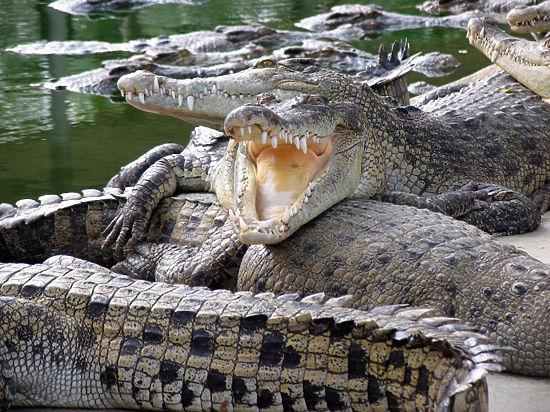 Жертвами подмешанной в пиво желчи крокодила стали более 70 жителей Мозамбика