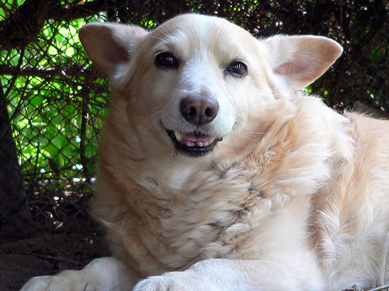 У собак появится свой аналог резиновой женщины