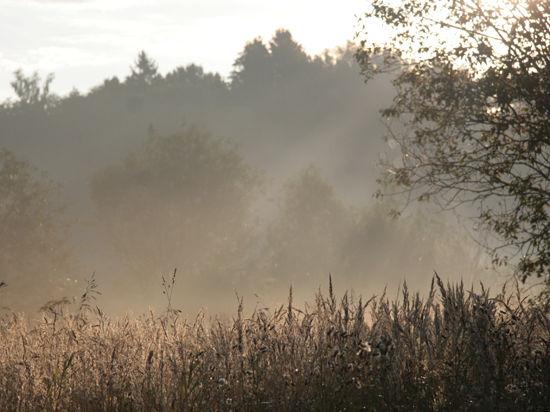 Житель Подмосковья, гулявший 9 дней по лесам, теперь постоянно ест и плачет