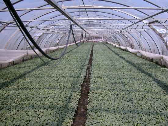 C вступлением в ЕС Украина может потерять сельхозэкспорт