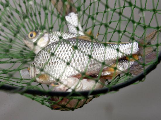 Соседство с прачечной оказалось губительным для рыбы?