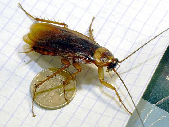 Уничтожение тараканов не будет