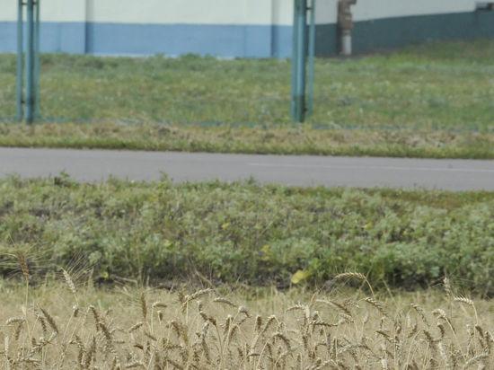 Европа сохранила санкции против РФ. Фермеры рады, энергетики в панике