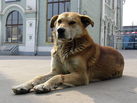В Москве собакам и кошкам хотят вернуть паспорта