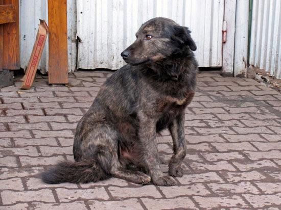 Беженцы из Донецка бросают домашних животных умирать под пулями
