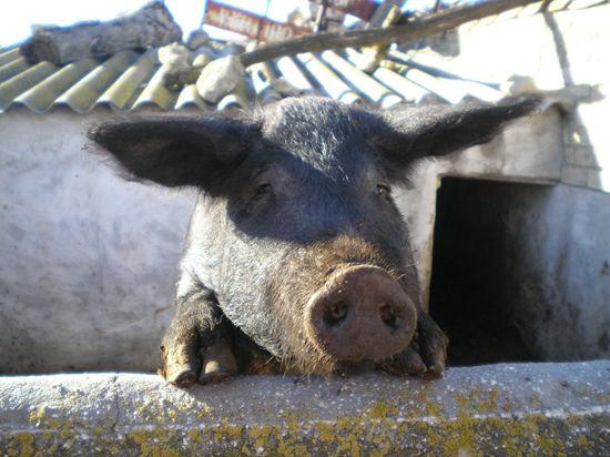 Свинина от кровотечения и депрессия у хозяев кошек: за что вручили Шнобелевскую премию в этом году