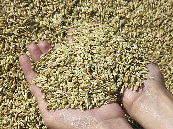 Рубль тянет за собой зерно