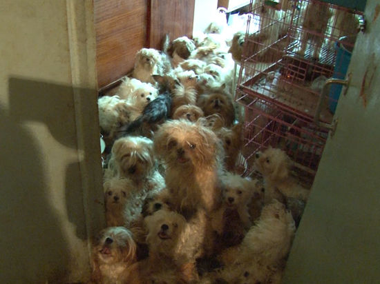 Картинки по запросу Более 200 собак...