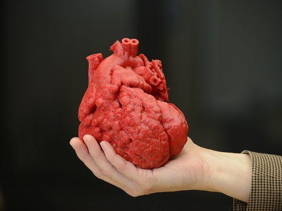 Медики впервые напечатали на 3D принтере функциональное человеческое сердце